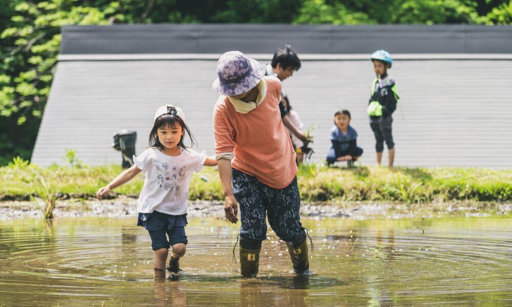 通える野菜畑Znzo〈ジンゾウ〉で マコモづくりを体験!
