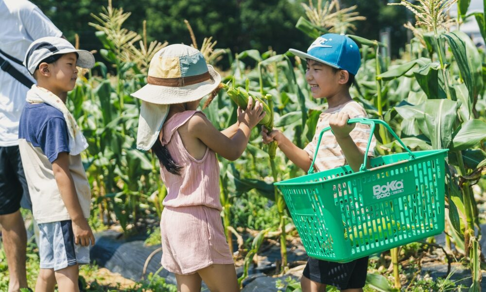 採れたてだから一層おいしい! ふれあい農園のトウモロコシ収穫体験
